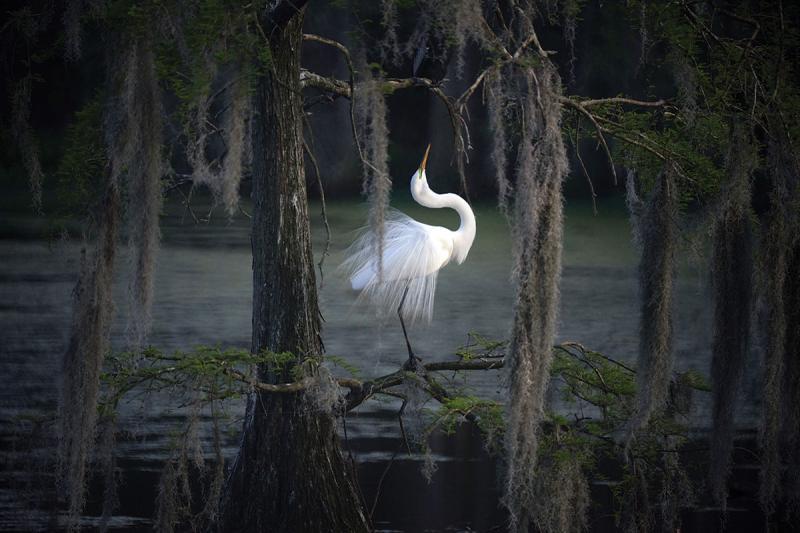 DSC07602a.swamp-ballet