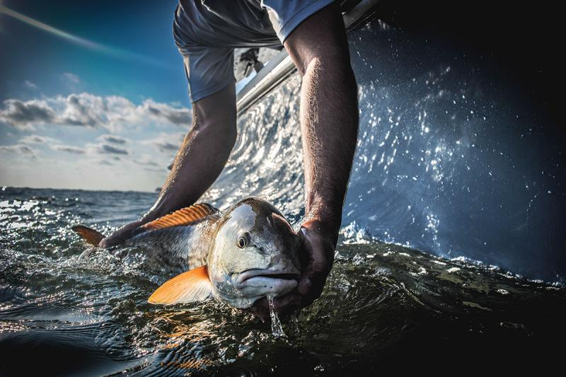 The-release-of-a-Redfish-in-Charleston-Harbor.